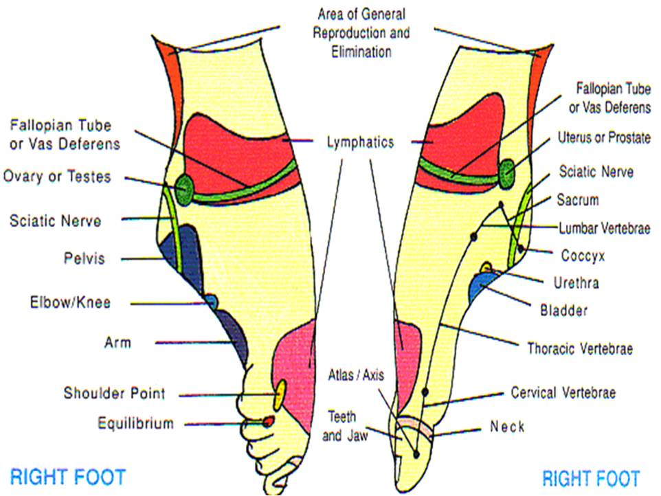 Heel Foot Pressure Points Diagram Diy Wiring Diagrams