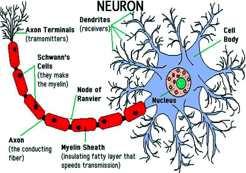 Neoron